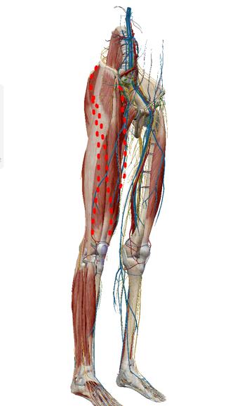 大腿神経痛ライン