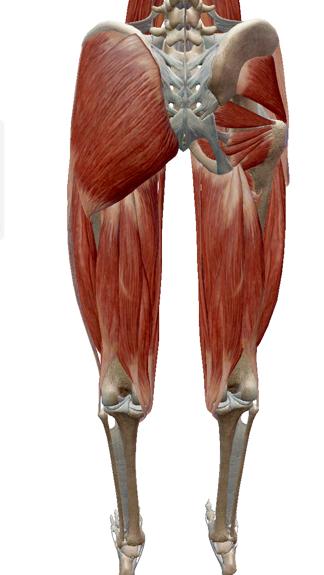 お尻の筋肉