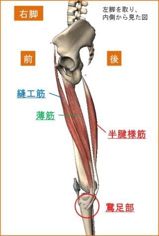 鵞足炎の痛み
