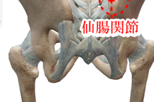 腰痛と股関節の痛みでAKA療法を受けられた方の治療part2