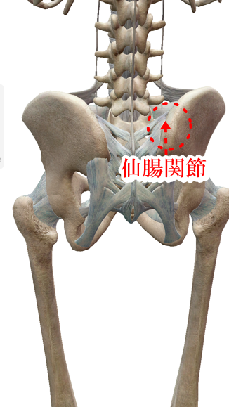 仙腸関節性の腰痛